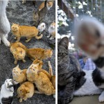 Dans les Vosges, elle est expulsée pour impayés et laisse derrière elle… ses 113 chats