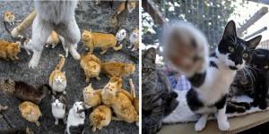 113-chats-chez-une-vosgienne