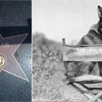 L'histoire de Rintintin, le célèbre chien Lorrain