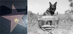 rintintin-star-hollywood