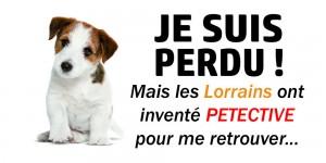 petective-application-participative-recherche-animaux