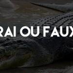 Un crocodile en Lorraine ?