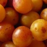 Mirabelle de Lorraine 2017 : Seulement 45% de la récolte cette année