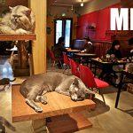 Le 1er bar à chats va ouvrir à Metz