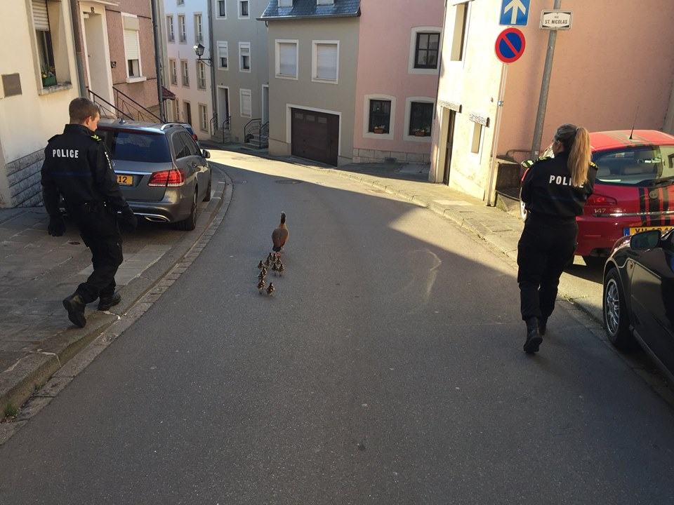 canard-lux-police