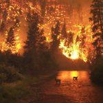Une photo de fin du monde pour les incendies au Portugal