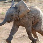 La fondation Brigitte Bardot finance la première maison de retraite pour éléphants