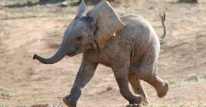 maison-retraite-elephant-limousin