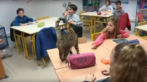 chat-école-ronrontherapie