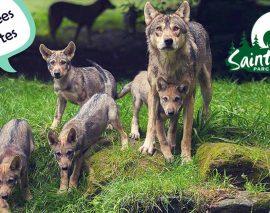 le Parc animalier de Sainte-Croix élu parc préféré des Français