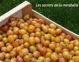 Les 5 secrets de la mirabelle de Lorraine