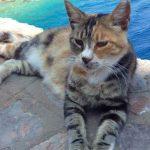 Elle devient la gardienne des 55 chats d'une île paradisiaque en Grèce