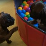 Une crèche pour chiens vient d'ouvrir en Lorraine