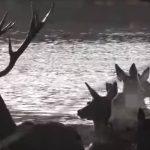 Un photographe immortalise la traversée d'une harde de cerfs et de biches