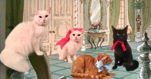 duchesse-chaton-disney
