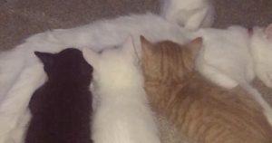 duchesse-chaton-disney-vraie-vie-naissance