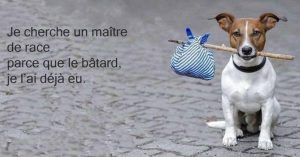 8000-abandons-chiens-chats-animaux-domestiques