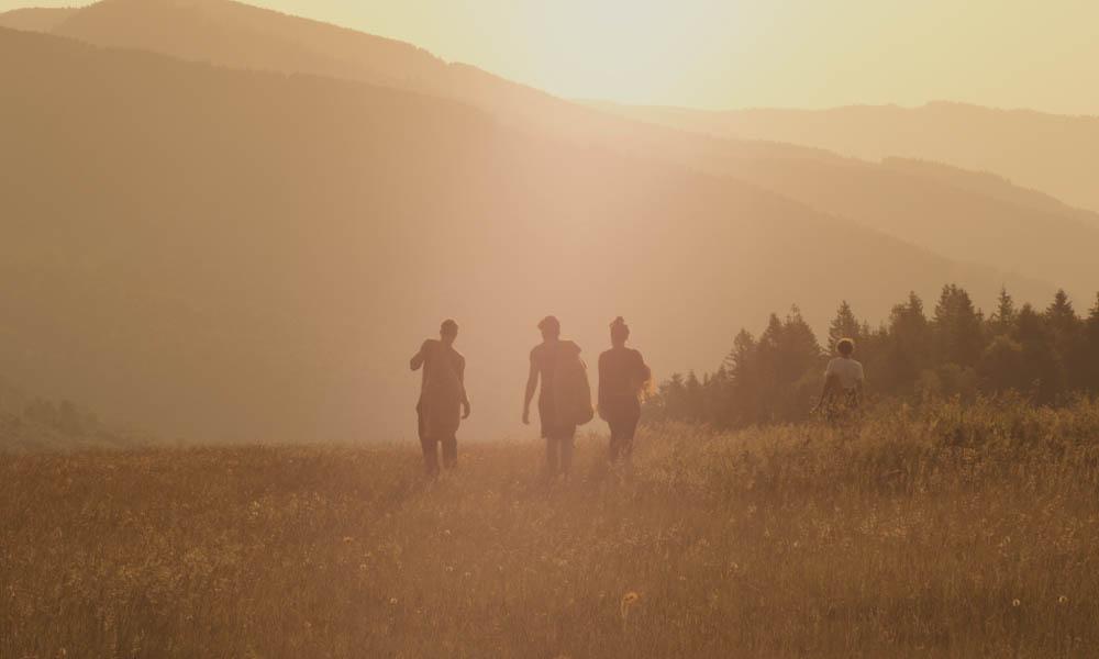 cueillette-arnica-vosges-2019-gerardmer-tourisme