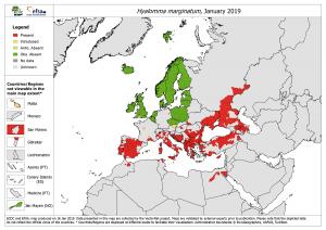 graphique-europeen-tiques