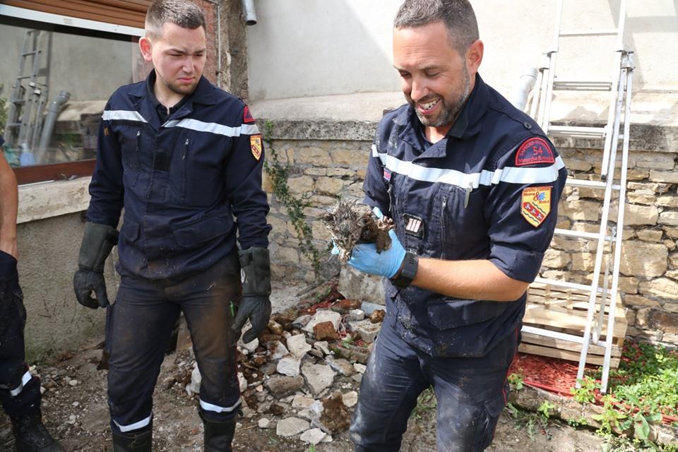 pompiers-villerupt-sauvent-chat-54