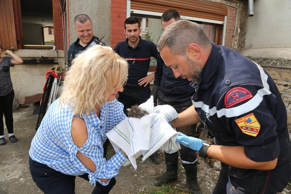 pompiers-villerupt-sauvent-chaton