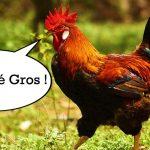 La justice autorise le coq Maurice à chanter en toute liberté sur l'île d'Oléron