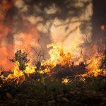 Un barbecue sauvage mal éteint provoque un feu de forêt dans les Vosges