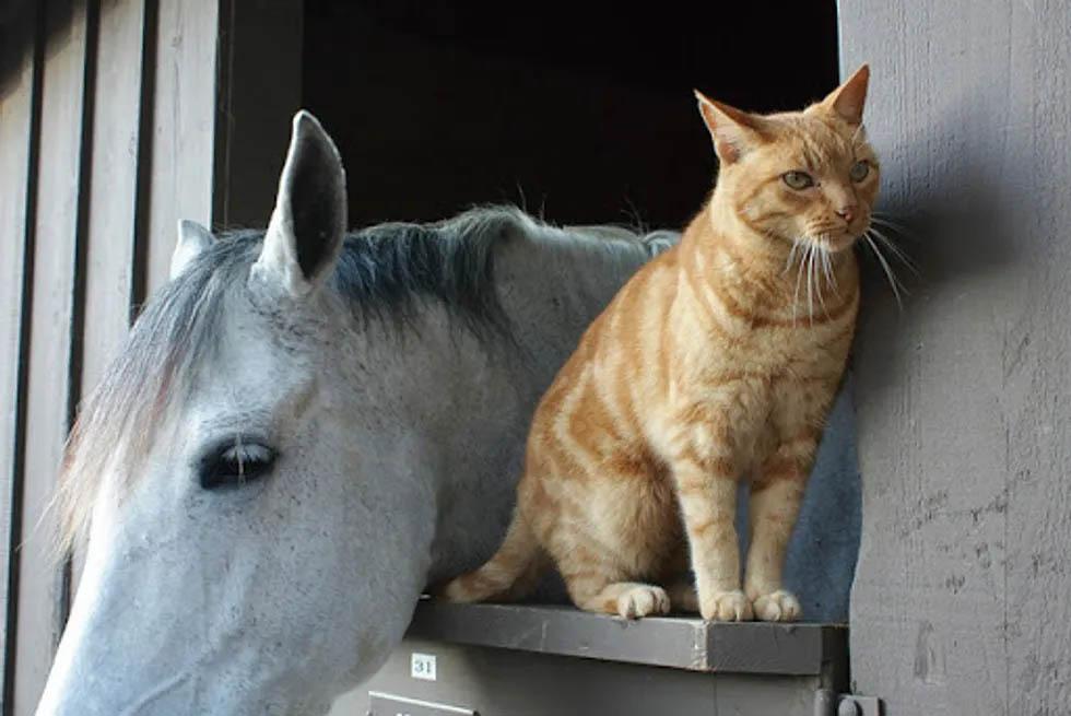 Iggy-le-chat-et-Oprah-le-cheval-amis-pour-la-vie