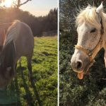 7 avantages de marcher avec son cheval