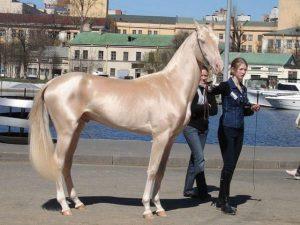 chevaux-rares-10-races