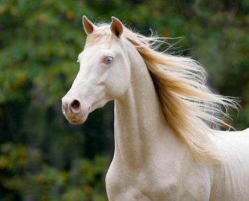 chevaux-rares-10-races-facebook-le-lorrain