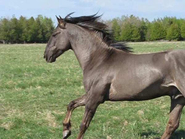 chevaux-rares-10-races-facebook-lelorrain