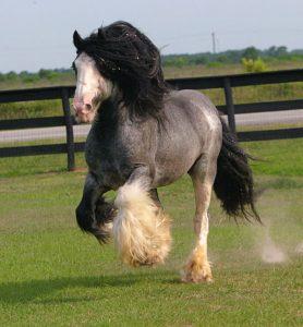 chevaux-rares-10-races-fb-le-lorrain