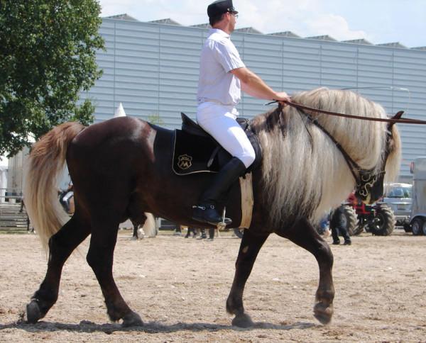 chevaux-rares-10-races-le-lorrain