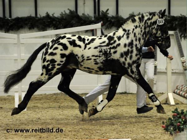 chevaux-rares-10-races-page-fb