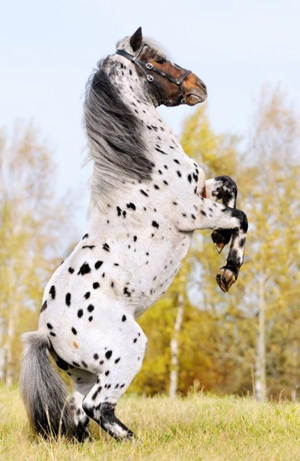 chevaux-rares
