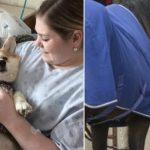 Dans cet hôpital canadien, les animaux accompagnent les patients