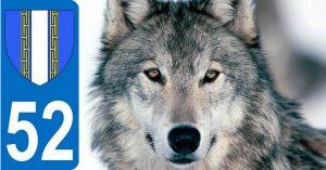 loup-mort-haute-marne