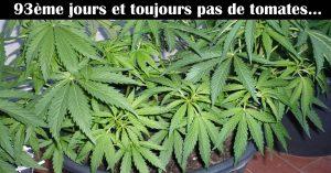 vol-cannabis-il-appelle-la-police-vosges