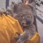 Face aux incendies, l'Australie fait appel pour la première fois à ses réservistes