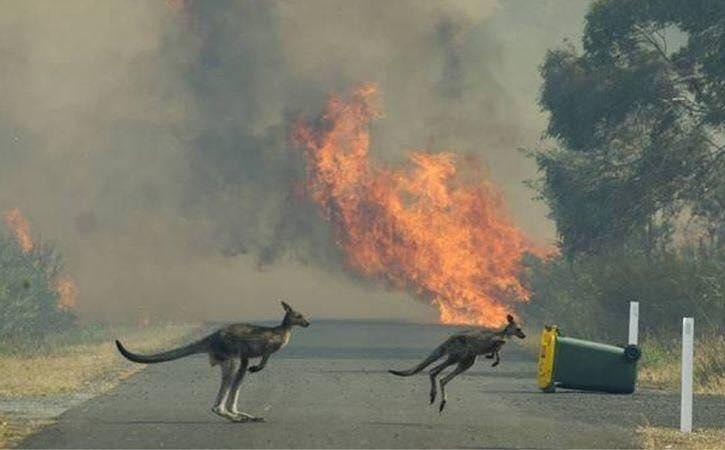 australie-incendie-2019-2020