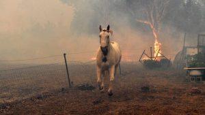 australie-incendie-500-millions-animaux-mort-2020