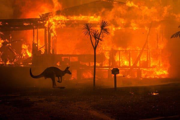 australie-incendie-500-millions-animaux-mort