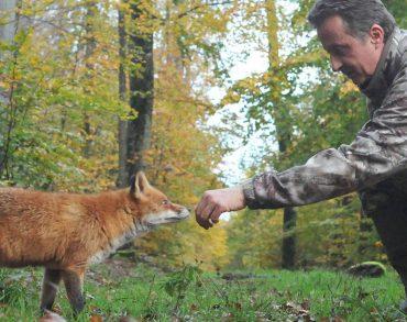 L'incroyable histoire d'amitié entre un photographe lorrain et une renarde sauvage