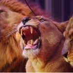 Le gouvernement annonce la fin des animaux sauvages dans les cirques intinérants