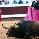 Corrida : L'Europe vote pour interdire les aides aux élevages de taureaux de combat