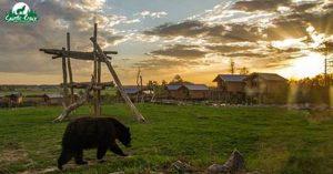 sainte-croix-meilleur-parc-animalier-frane-2020-capital