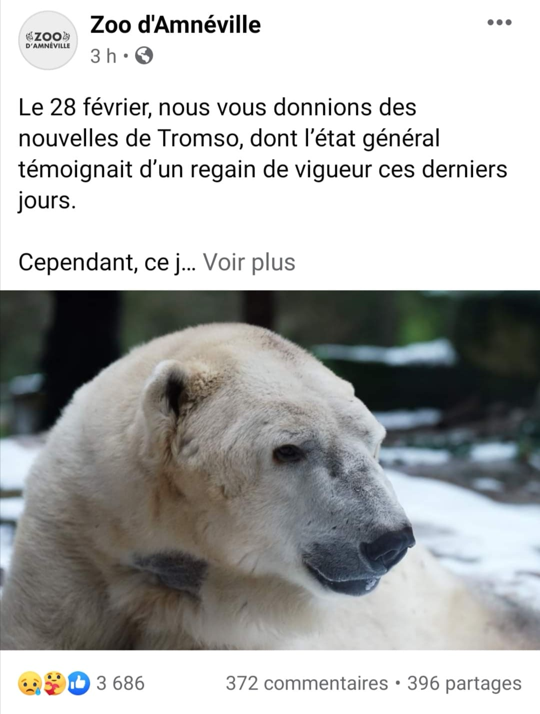ours-polaire-tromso-amneville-mort