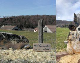 Val-d'Ajol : il sculpte une vache vosgienne visible dans un pré
