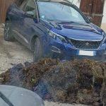 Un agriculteur lorrain déverse son fumier devant la voiture de ses voleurs de légumes